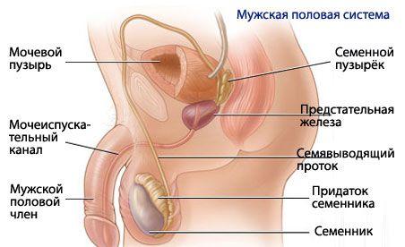 stazinis prostatitas ir erekcija)